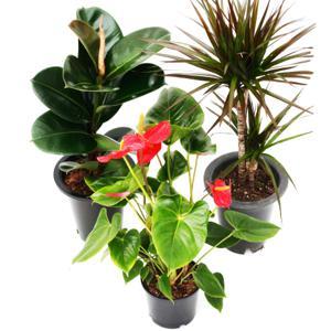 미세먼지제거 공기정화식물 중형포트 모음