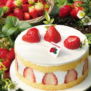 파리바게뜨 논산 생딸기 케이크