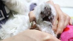 애견이발기 첫경험한 우리집 고양이, 가위보다 안전해!